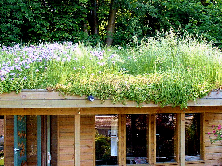 green roof for wildlife